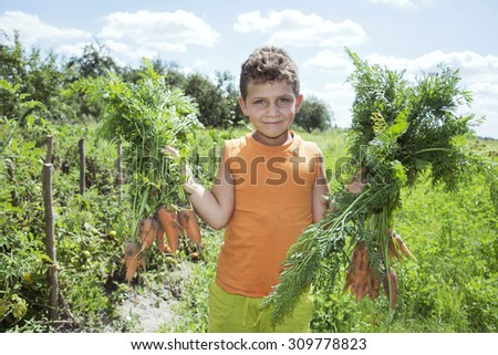 In the summer the garden boy gathered the harvest of carrots, he holds it in his hands. - stock photo