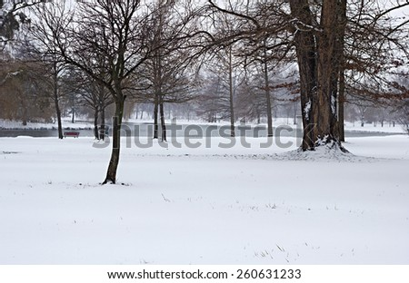 In the winter park - stock photo