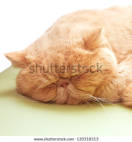 In winter and spring where it feels cold, people and cat like lying in warm places and rather than wake up - stock photo