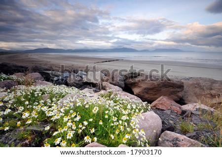 Inch beach , Dingle,Ireland - stock photo