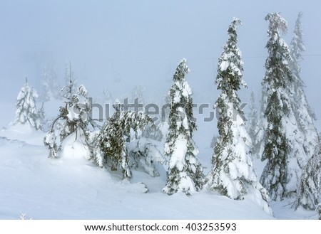 Inclined icy snowy fir trees on winter hill in cloudy misty weather. - stock photo