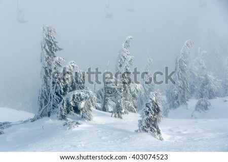 Inclined icy snowy fir trees on winter morning hill and chairs of ski lift in fog. - stock photo
