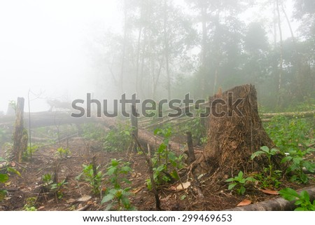 increse deforestation for cultivate, Lao - stock photo