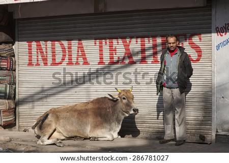 INDIA, Delhi; 21 january 2007, indian man and a cow at the Uttar Pradesh market - EDITORIAL - stock photo