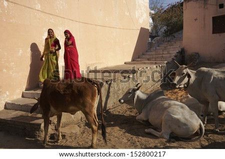 India, Rajasthan, Pushkar, indian women wearing sari and sacred cows - stock photo