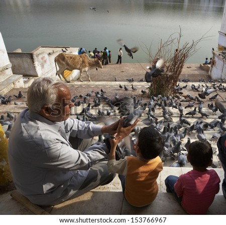 India, Rajasthan, Pushkar, pigeons and a sacred cow on the steps to the lake - stock photo