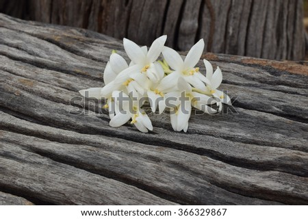 Indian cork flowers on the old wood texture.Selective focus with shallow depth of field. - stock photo