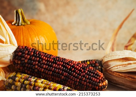 Indian corn and pumpkin with copy space.  - stock photo