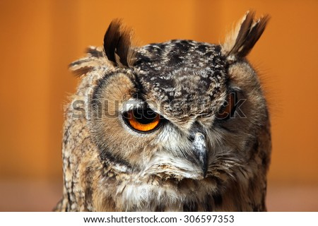 Indian eagle-owl (Bubo bengalensis), also known as the Bengal eagle-owl. Wild life animal.  - stock photo