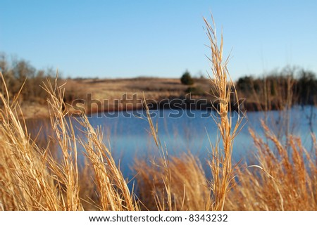 Indian Grass and Ranch Pond - stock photo