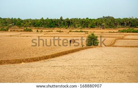 Indian landscape, Kerala - stock photo