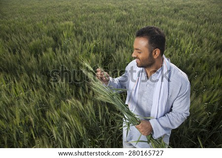 Indian man holding crop plant - stock photo