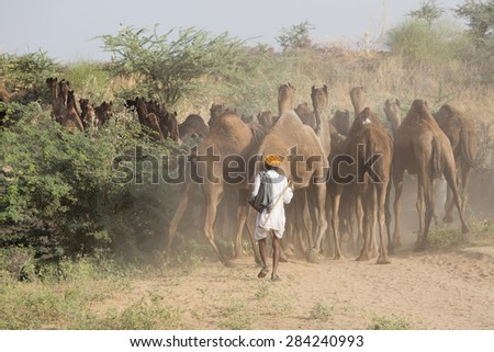 Indian men and camels attended the annual Pushkar Camel Mela. This fair is the largest camel trading fair in the world. - stock photo