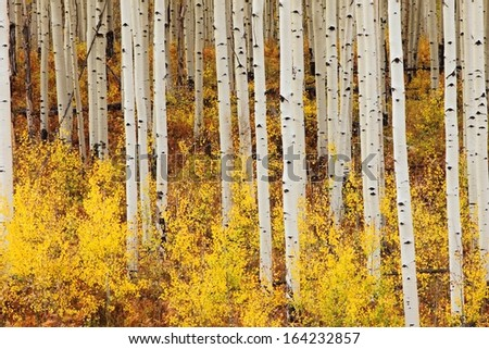indian summer in colorado - stock photo