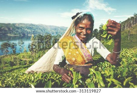 Indigenous Sri Lankan Tea Picker Harvesting Concept - stock photo