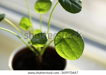 Indoor plant - stock photo