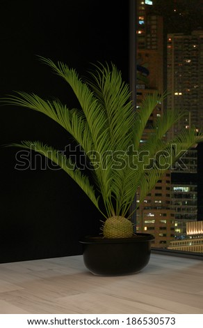 Indoor plant (houseplant) against dark wall - stock photo