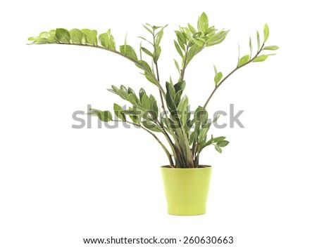 Indoor plants - stock photo