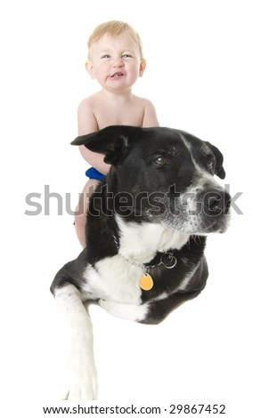 infant sits on his dogs back - stock photo