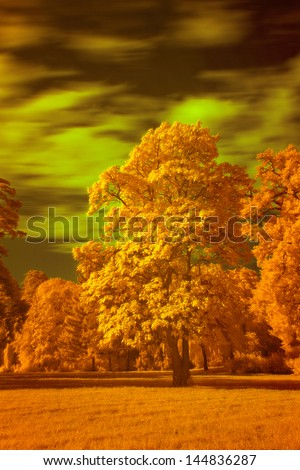 Infrared Landscape - stock photo