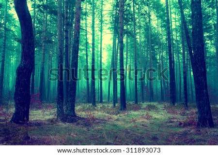 infrared landscape of autumn forest in the morning - stock photo