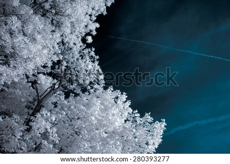 Infrared Landscape with Beautiful White trees and Water - stock photo