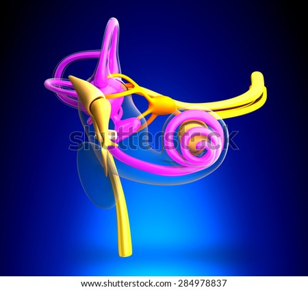 Inner Ear Anatomy on blue background - stock photo