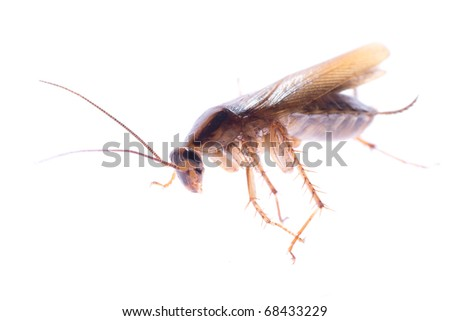 insect cockroach bug isolated on white - stock photo