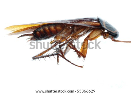 insect dead roach - stock photo