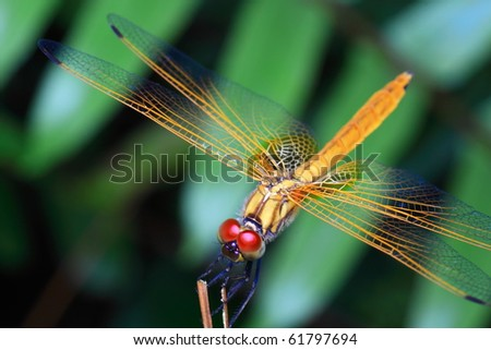 insect from nature - stock photo