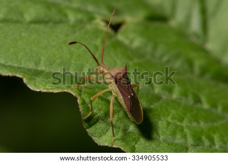 insect life of insect - stock photo