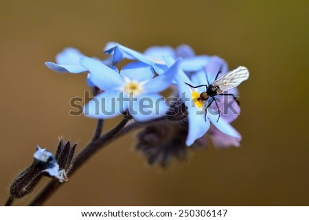 Insect on a flower Macro shot of nature - stock photo