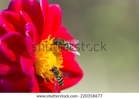 Insect on a large flower on a bright sunny day - stock photo