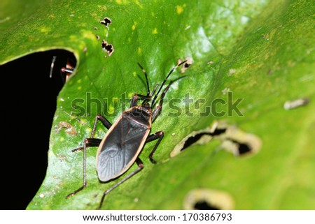 Insect on green leaf - stock photo