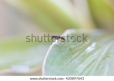 Insect perched on leaves Macro small insect perched on a leaf. - stock photo