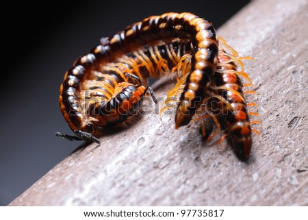 insects - stock photo