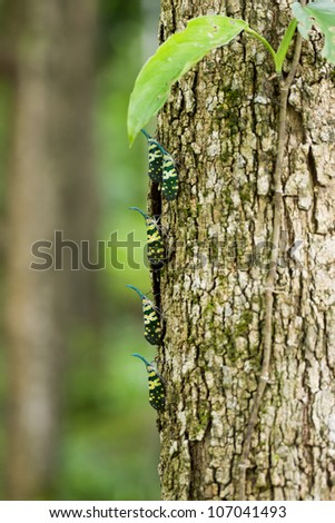 Insects on the branches. - stock photo
