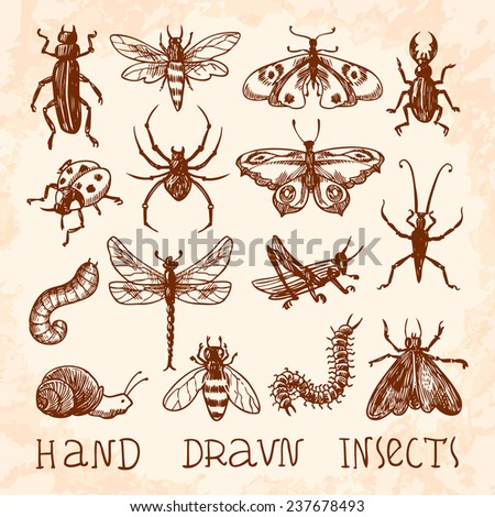 Insects sketch decorative icons set with dragonfly fly butterfly isolated  illustration - stock photo