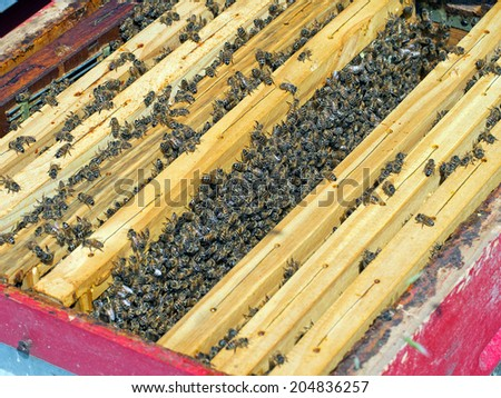 Inside a beehive - one frame removed to show activity. Bee-keeping. - stock photo