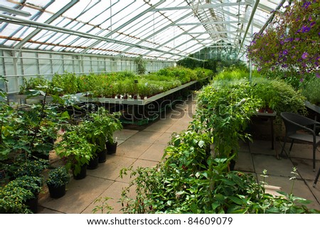 Inside a plastic covered horticulture greenhouse of garden center selling flowers and plants - stock photo