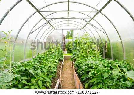 Inside plastic covered horticulture greenhouse - stock photo