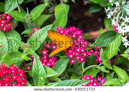 Inside the butterfly Garden of Singapore Airport - stock photo