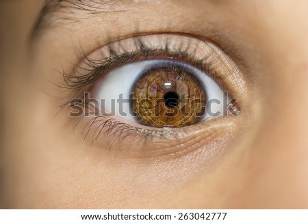 insightful look brown eyes - stock photo