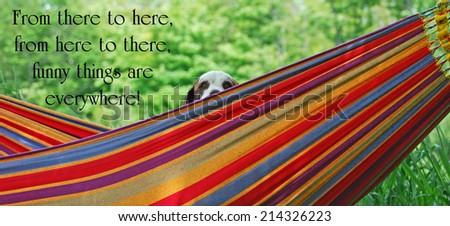 Inspirational quote about humor by Dr. Suess, with a springer spaniel dog peeking out from a hammock in the summer. - stock photo