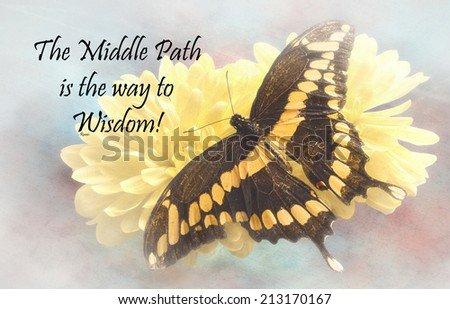 Inspirational quote about life and spirit by the persian poet Rumi with a beautiful Giant Swallowtail  Butterfly  on a textured background  - stock photo