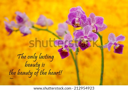 Inspirational quote about life and spirit by the Persian Poet Rumi with a beautiful purple orchid on a yellow background  - stock photo