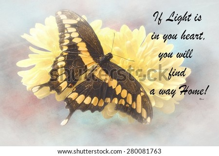 Inspirational quote about life,love, and spirituality with a beautiful Butterfly  in the background  - stock photo