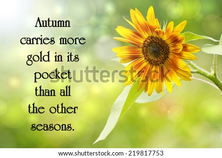 Inspirational quote on autumn by Jim Bishop, with a beautiful sunflower in the sunshine, and bokeh.  - stock photo