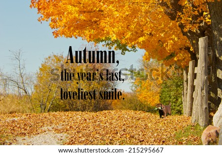 Inspirational quote on Autumn by William Cullen Bryant on a background with a beautiful fall lane with a little chocolate lab puppy. - stock photo
