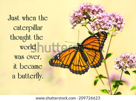 Inspirational quote on life by an unknown author with a pretty monarch butterfly perched at a flower. - stock photo